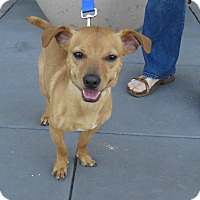 Adopt A Pet :: Malachi (Mal) - Scottsdale, AZ