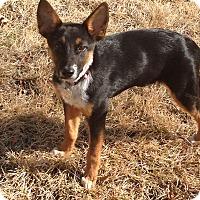 Adopt A Pet :: Keegan - Marietta, GA