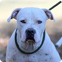 Adopt A Pet :: Woody - Sparta, TN