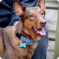 Adopt A Pet :: Declan - Jasper, GA