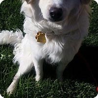 Adopt A Pet :: Gasparre - La Verne, CA