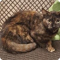 Adopt A Pet :: Peach - Americus, GA