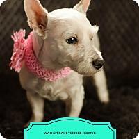 Adopt A Pet :: Libby - Omaha, NE