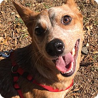 Adopt A Pet :: Ellen - Savannah, GA