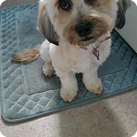 Adopt A Pet :: Dolly - Long Beach, CA