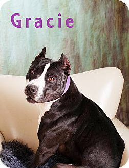 American Pit Bull Terrier Dog for adoption in Prole, Iowa - Gracie