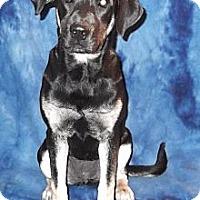 Adopt A Pet :: Dixie - Hendersonville, TN