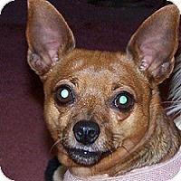 Adopt A Pet :: Diamond - Springvale, ME