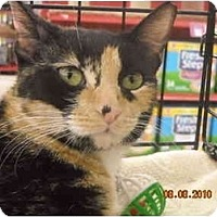 Adopt A Pet :: Faith - Riverside, RI