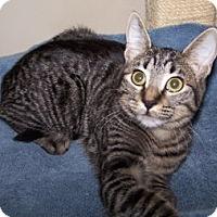 Adopt A Pet :: K-DelMar2-Sparrow - Colorado Springs, CO