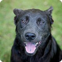Adopt A Pet :: Paco - Daleville, AL
