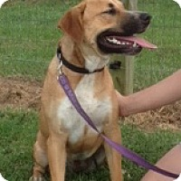 Adopt A Pet :: Roxie - Medora, IN