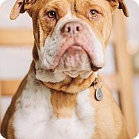 Adopt A Pet :: Chunk - Portland, OR