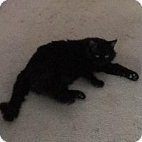 Adopt A Pet :: Sundance - Middleton, WI