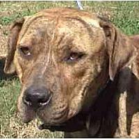 Adopt A Pet :: TG-Precious - Tyler, TX