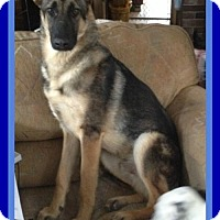 Adopt A Pet :: LUCKY - Sebec, ME