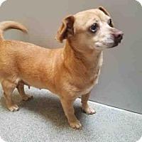 Adopt A Pet :: ZOEY - West Valley, UT