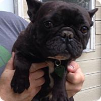 Adopt A Pet :: Mermaid - Chesterfield, MO