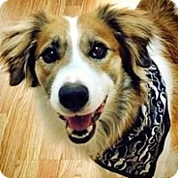 Adopt A Pet :: Bailey - New Boston, NH