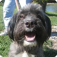 Adopt A Pet :: Chloe - Orange Park, FL