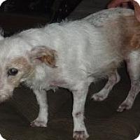Adopt A Pet :: Wally - Raleigh, NC