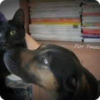 Adopt A Pet :: Lilly - Conway, AR