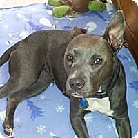 Adopt A Pet :: Cee Cee - Pittsburgh, PA