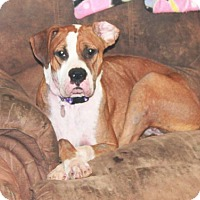 Adopt A Pet :: Abbie Gail - Dayton, OH