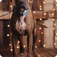 Adopt A Pet :: Phoenix - Portland, OR