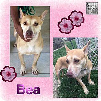 Terrier (Unknown Type, Small) Mix Dog for adoption in Washington, Pennsylvania - Bea