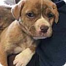 Adopt A Pet :: Willow's Gabby
