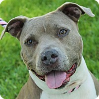 Adopt A Pet :: CALLIE/Spayed, Low Fees - Red Bluff, CA