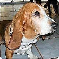 Adopt A Pet :: Lisa - Phoenix, AZ
