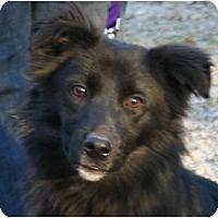 Adopt A Pet :: Teddy -- Pending! - Belleville, MI