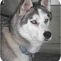 Adopt A Pet :: Morgan - Kettle Falls, WA
