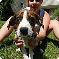 Adopt A Pet :: Jet - South Jersey, NJ