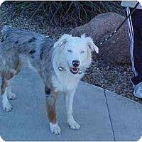 Adopt A Pet :: Sierra - Mesa, AZ