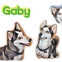 Adopt A Pet :: Gaby - Seminole, FL