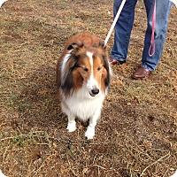 Adopt A Pet :: Juliet - San Diego, CA