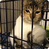 Adopt A Pet :: Kattie Marie - Byron Center, MI