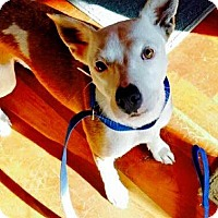 Adopt A Pet :: Hope - Wappingers, NY