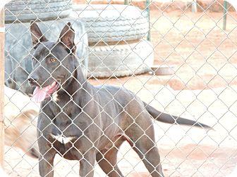 German Shepherd Dog Mix Dog for adoption in Denver City, Texas - Duke