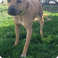 Adopt A Pet :: Paisley - Otterbein, IN
