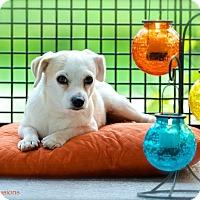 Adopt A Pet :: Buster - Ocean Ridge, FL