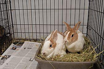 Dutch for adoption in Erie, Pennsylvania - Holly