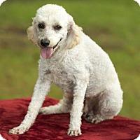 Adopt A Pet :: Winston-handsome little man---S - Santa Fe, TX