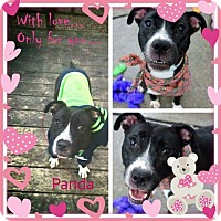 Adopt A Pet :: PRADA - Flintstone, MD