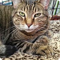 Adopt A Pet :: Souki - Sarasota, FL