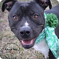 Adopt A Pet :: Matilda - River Rouge, MI