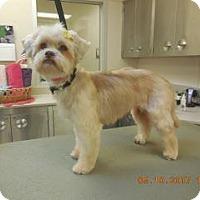 Adopt A Pet :: Gertie - Wildomar, CA
